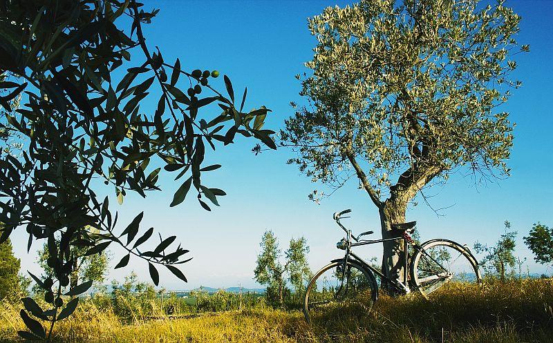 Włosi już nie chcą samochodów? Rowery sprzedają się jak świeże bułeczki